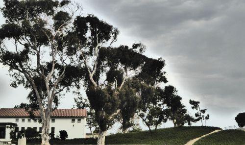 eukaliptas, eukalipto & nbsp, medžiai, medis, medžiai, eukalipto medžiai