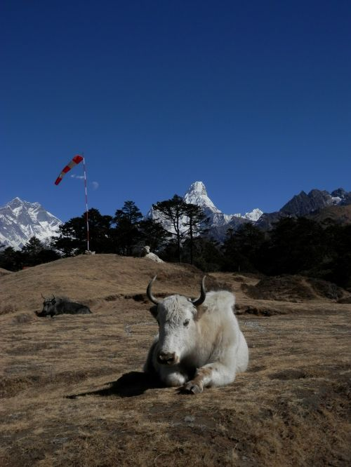 Everest,Lhotse,Nepalas