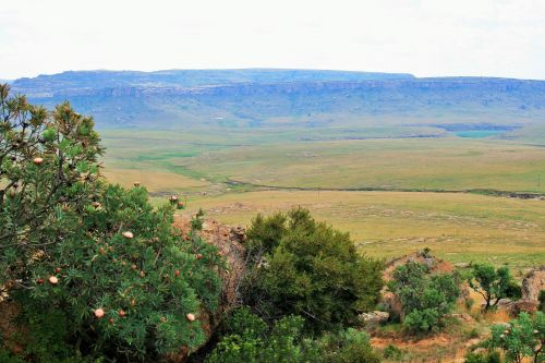 protea, Drakensbergas, auksiniai & nbsp, vartai & nbsp, nacionalinis & nbsp, parkas, slėnio ir kalnų paplūdimiai