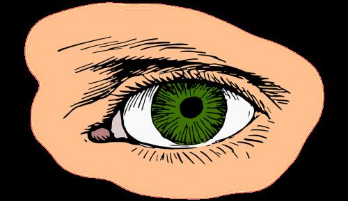 akis,blakstienų,žalias,optinis,optinis,organas,regėjimas,nemokama vektorinė grafika