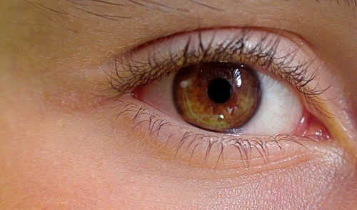 akis,žmogaus akis,anatomija,žmogaus statyba,akių vokai,blakstienos,żrenica,akių spalva,akies rainelė,atrodo,ryškumas,žvilganti akis,regėjimas,akies lęšis,jaunas akis,ryški akis,akies centras,atspindys