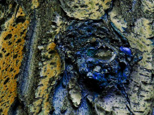 fantastika & nbsp, fonas, medis, akis, atsiranda, monstras, velnias, viena akis, fonas, tekstūra, žievė, pareidolija, mėlynas, geltona, akis medyje