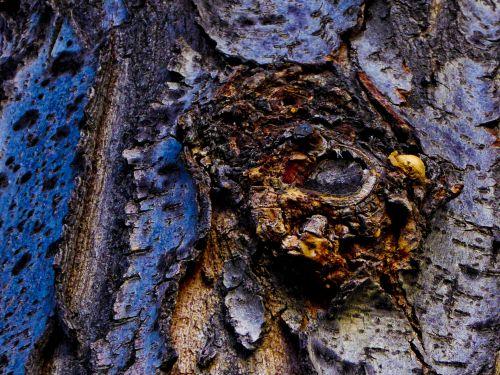 fantastika & nbsp, fonas, medis, akis, atsiranda, monstras, velnias, viena akis, fonas, tekstūra, žievė, pareidolija, akis medyje