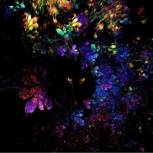 akys,katė,vaizdas,modelis,lapai,fraktalas,kačių akys,naminis gyvūnėlis,Peržiūros,geltonos akys