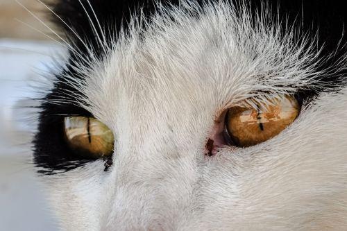 akys,katė,bjaurus,gyvūnas,veidas,atrodo,gatvės katė,benamiai,žiūri
