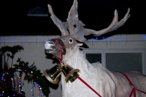 šiaurės elniai, santa, rudolph, apdaila, Kalėdos, xmas, šventė, šiaurės elnies veidas