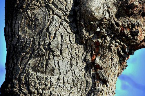 veidas, bagažinė, gamta, pareidolija, veidas & nbsp, medis, matyti, iliuzija, panašumas, apopenija, šypsosi medžio veidas
