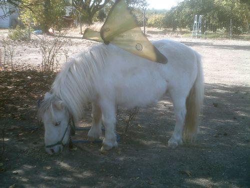 arklys, ponis, miniatiūrinis & nbsp, arklys, fantazija, pasakos arklys