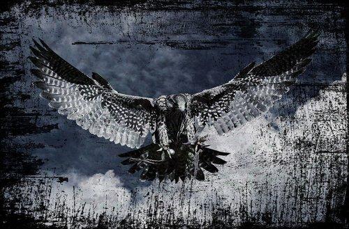 Falcon, Raptor, laukinis gyvūnas, plunksna, plėšrusis paukštis, paukštis, pobūdį, Gyvūnijos pasaulyje, Bill, gyvūnas, menas, Anotacija, tapyba, Abstraktus menas, išraiškingas, modernus menas, modernus, vaizdas