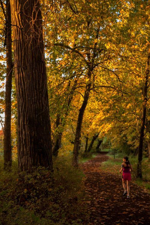 kritimas,bėgimas,takas,miškas,ruduo,lauke,fitnesas,bėgikas,Sportas,pratimas,gamta,asmuo,Moteris,jogger,mergaitė,paleisti,sveikas,gyvenimo būdas,bėgiojimas,lauko fitnesas,aktyvus