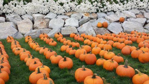 kritimas,moliūgas,Halloween,oranžinė,derlius,Spalio mėn,padėka,šventė,pleistras,lapkritis,kritimo festivalis,moliūgo pleistras,ruduo