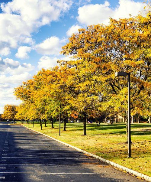 kritimas,lapija,ruduo,geltona,gamta,medžiai,sezonas,spalvinga,lapai,kritimo lapija,natūralus,peizažas,vaizdingas,dangus,lauke,mėlynas,krito medžiai,taikus,rudens,auksas,šviesa,saulės šviesa,dienos šviesa,saulės šviesa