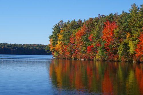 kritimas,lapija,ežeras,spalvinga,lapai,ruduo,kritimo lapija,gamta