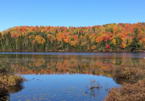kritimas,québec,gamta,ežeras,kraštovaizdis,rudens kraštovaizdis,spalvos,Kanada,medžiai,vanduo,upė,quebec,dangus,miškas,quebec canada,kvebeko kraštovaizdis