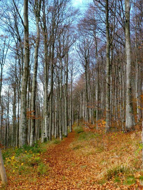 kritimas,medis,kritimo spalvos,ruduo,aukso ruduo,lapai,spalvinga