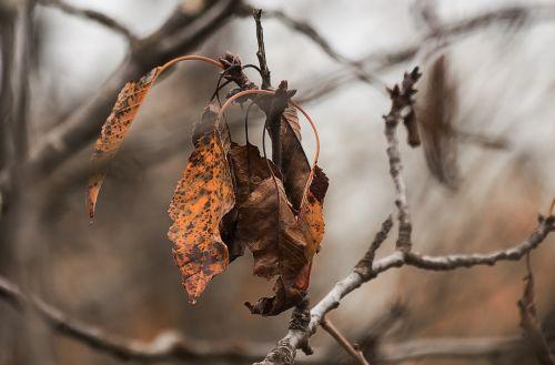 kritimas,lapai,rudens lapai,negyvas lapelis,lapai,gamta,medžių lapai,ruduo,lapija,medis,rudens kraštovaizdis,sausas lapai,rudens lapas