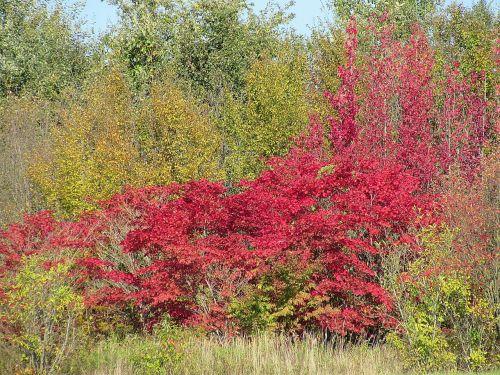 kritimo spalva,farbenspiel,kritimo lapai,krūmai,medžiai,miškas