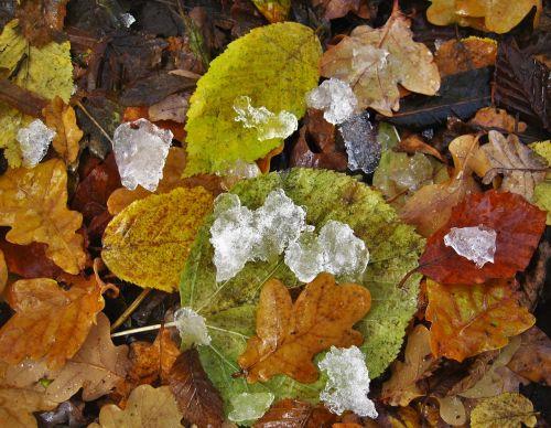 kritimo lapija,eisbröckchen,šaltas sezonas,anksčiau wintereinbruch,lapai ir ledas,ledo gabalėliai,gamta,lapai,kritimo spalva,šaltas,šaltas ruduo,spalvoti lapai,kritimo lapai