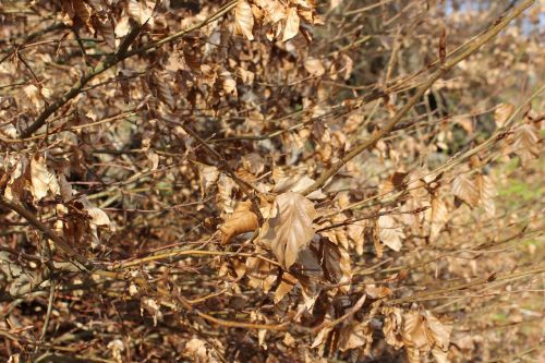 kritimo lapija,ruduo,lapai,viduje,miškas,aukso ruduo