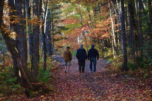 kritimo lapai,ruduo,kritimas,kritimo lapų fonas,sezonas,gamta,lapai,klevas,Spalio mėn,lapija,spalvinga,sezoninis,miškas,vaikščioti,draugai