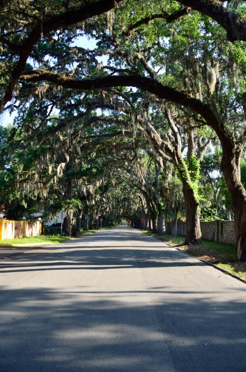 žinomas, magnolija & nbsp, gatvė, gatvė, gyvas & nbsp, ąžuolas, medžiai, ispanų & nbsp, samanų, tamsintas, st & nbsp, augustine, florida, garsi Magnolia gatvė