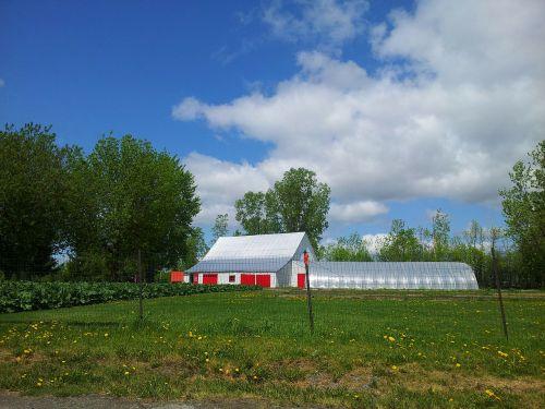 ūkis,tvartas,medis,žolė,kukurūzų žolė,aukšta žolė,dangus,mėlynas,žalias,suma