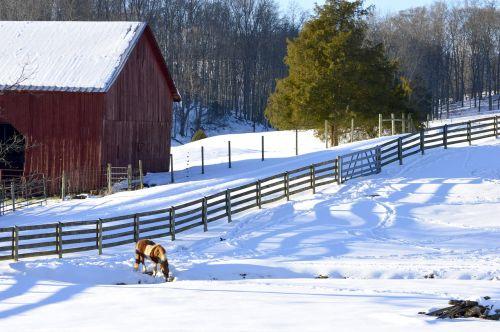 ūkis,kiautinė mediena,raudonasis svirnas,laukas,kaimas,sniegas,arkliai,tvora