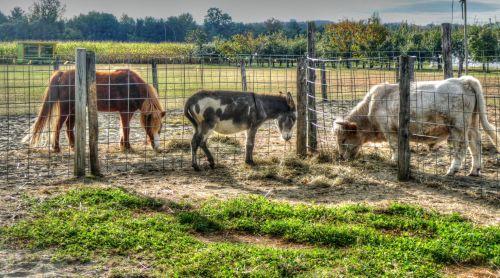 ūkis, ūkininkavimas, ūkio & nbsp, gyvūnai, gyvūnai, valdyti, karvė, ponis, arklys, meno, Šalis, kaimas, ūkio gyvūnai
