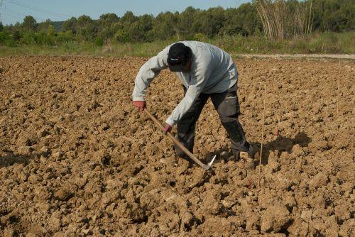 ūkininkas,plantacija,Rankinis darbas,vynuogių augintojas,vynmedis
