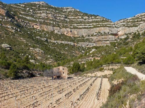 sodyba,vynuogynas,kalnų vynuogynas,anksčiau,montsant,mas den forçans