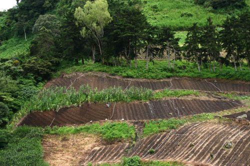 ūkis, daržovių, ūkininkavimas, darbuotojai, žemė, augti, atogrąžų, lietus, miškas, ūkininkavimas Panama