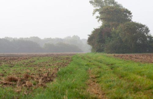 žemės ūkio paskirties žemė, ūkis, žemė, laukas, kaimas, trasa, žolė, medis, medžiai, miglotas, migla, rytas, anksti, ruduo, gamta, Laisvas, viešasis & nbsp, domenas, žemės ūkio paskirties žemės ankstyvą rytą rūkas