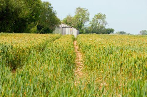 žemės ūkio paskirties žemė, vaizdas, kviečių laukai, Sussex, kaimas, tvartas, senas & nbsp, gražus, niekas, pasėliai, gamta, vaizdas, nuotrauka, žemės ūkio paskirties žemė
