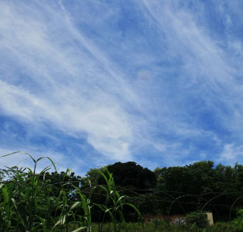 dangus, labai & nbsp, mėlynas, debesis, gudrus, balta, miglotas, plunksnus ir miglotas debesis