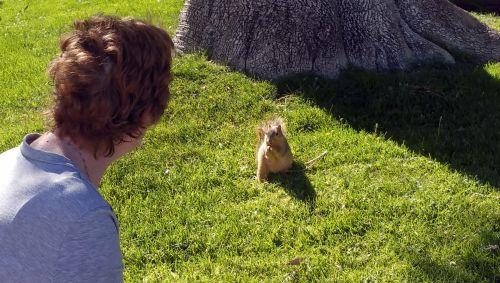 voverė, voverės, graužikas, moteris, šerti & vbs, šerti voverę