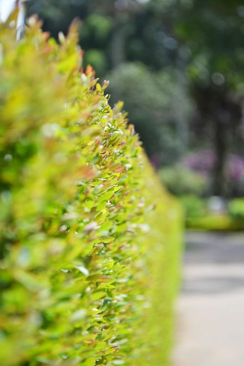 fens,maži augalai,maži lapai,žalias,lapai,Šri Lanka,ceilonas,Mawanella,peradeniya