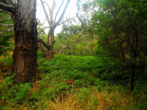 papartis, Gulley, upelis, medžiai, bushland, paparčiai gulliuose
