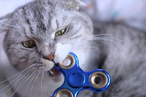 švelnus veržiklis,katė,kramtyti
