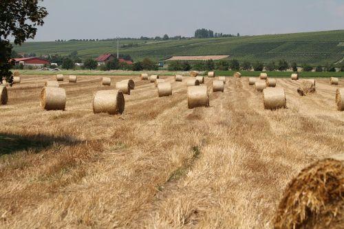 laukas,šieno ryšulius,ariamasis,Žemdirbystė,šiaudai,šiaudai,laukai,šienas