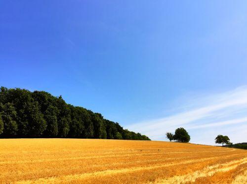 laukas,šiaudai,derlius,kraštovaizdis,Sumer,sausas,kvieciai