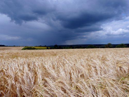 laukas,kraštovaizdis,tamsūs debesys,grasinanti