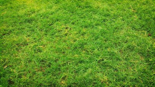 laukas,žolė,žolės laukas,žole žemė,ganyklos,žalias,žalia žolė,žemė,veja,dirvožemis,vasara,velėna,kiemas