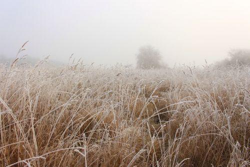 laukas,kvieciai,rūkas,rugių laukas,ariamasis,kraštovaizdis,grūdai,ausis,kukurūzų laukas