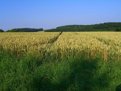 laukas,kraštovaizdis,ariamasis,gamta