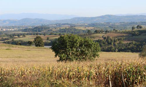 laukas,medis,kaimas,kocaeli