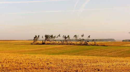 laukas,ūkis,apkarpyti,kraštovaizdis,gamta,tornadas,miškas,po vėjo,medis,medžiai sunaikinti,vasara,po audros
