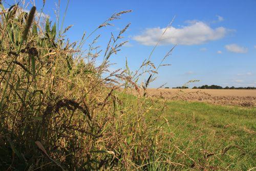 laukas,ariamasis,žolė,dangus