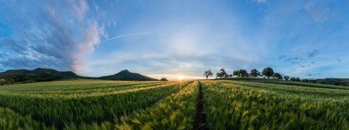 laukas,kraštovaizdis,saulėlydis,vasara,gamta,grūdai,miežiai,spiglys,miežių laukas,kukurūzų laukas,Žemdirbystė