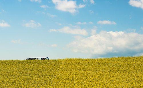 rapsų sėklos,aliejiniai rapsai,vasara,geltona,kraštovaizdis,laukas,pavasaris,debesys,dangus,gamta,minimalistinis,vw,vw bulli,vw autobusas