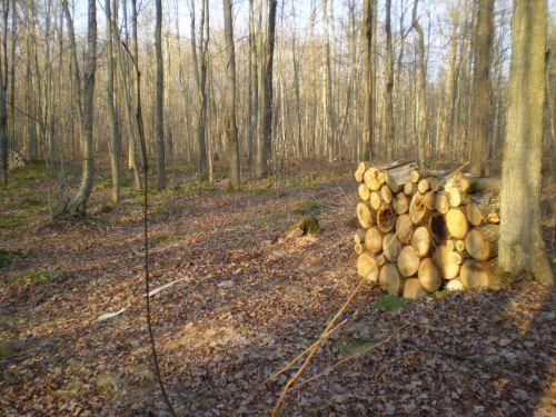 malkos, ruduo, sezonas, Ugnis, mediena, miškas, malkos miške